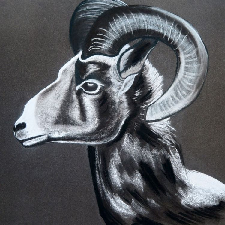 Aries. What is Hidden Beyond the Grey Horizon? 2