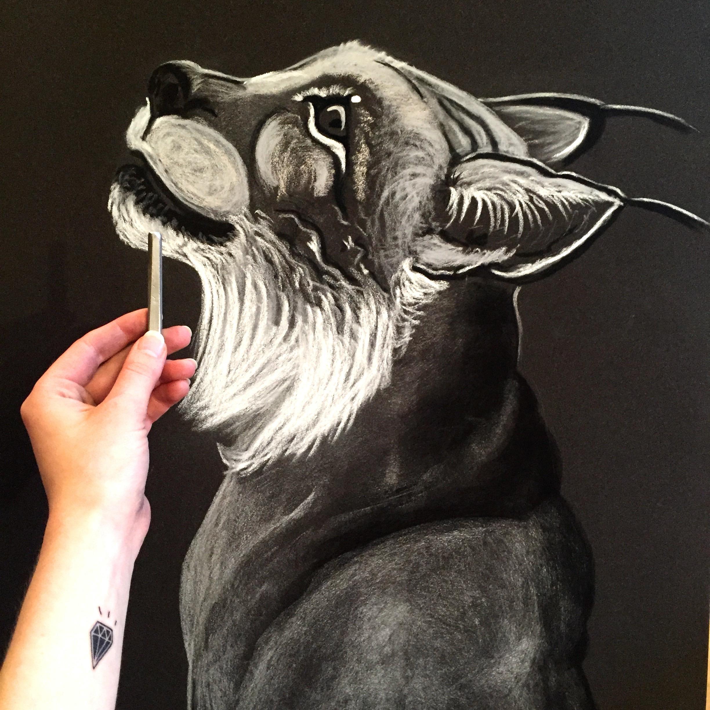 Lynx in the making. Pastel on sandpaper. Kaisa Kangro 2016